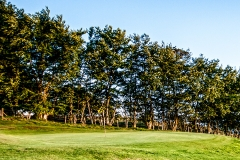 The trees sitting out of bounds behind the 6th green.